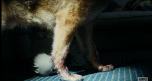 As Nick tries to comfort the whimpering dog, Madison notices blood on the dog's legs...